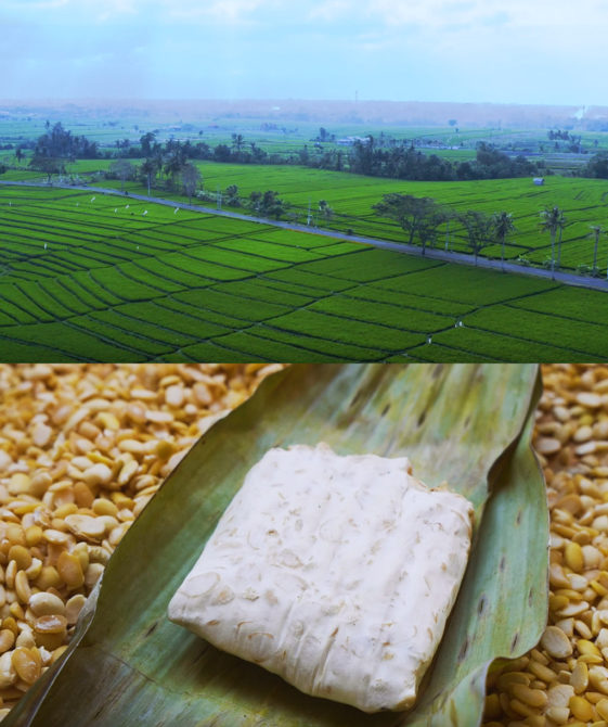 This photo depicts two shots, one of the beautifully lush green rolling fields of Indonesia, taken from above by a drone. The other shows an authentically created block of tempeh, unwrapped from it's banana leaf in which it was used to form the distinctive cake shape.